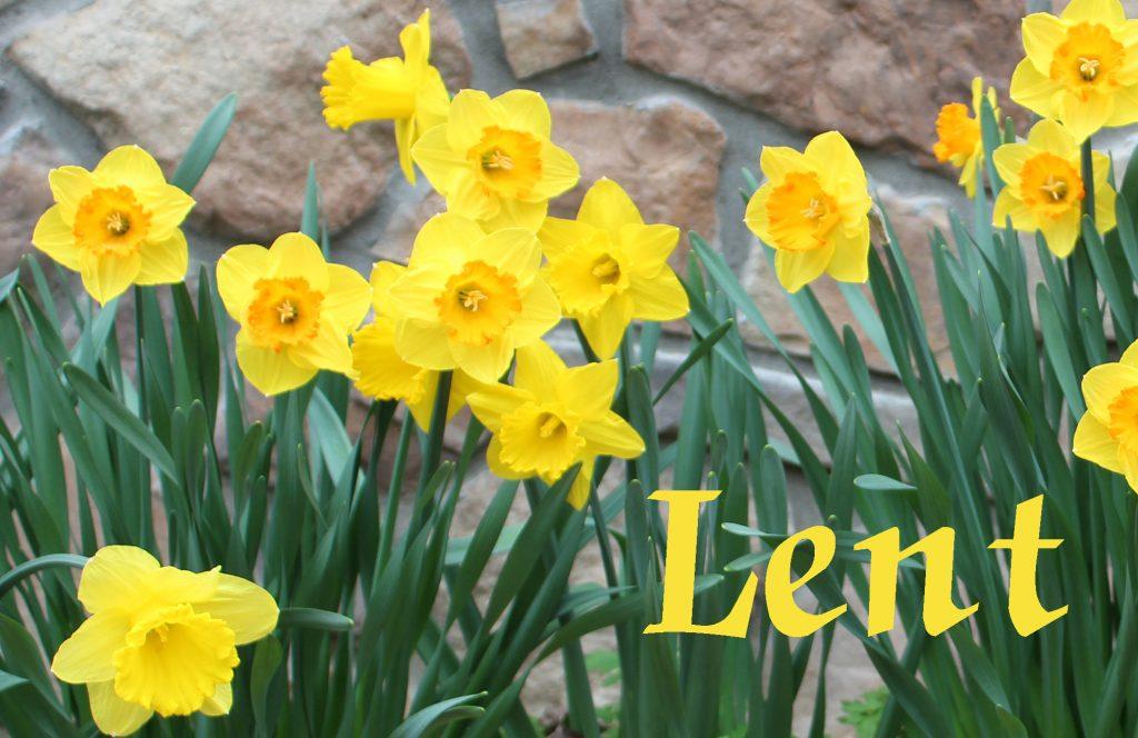 Lenten daffodils
